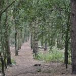 Pit Heap woods 3