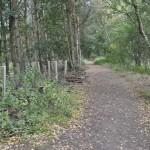 Pit Heap woods 5
